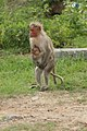 Monkey Mother's love.jpg