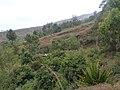 Mosteiros-Cultures mixtes sur les hauteurs (1).jpg