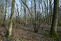 Motte op de Butsberg te Tielt-Winge - 372451 - onroerenderfgoed.jpg