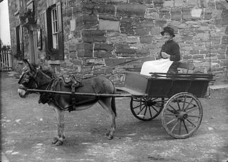 Mrs Oliver in a cart drawn by a donkey