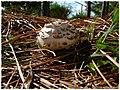 Mushroom - Flickr - pinemikey.jpg