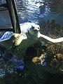 Myrtle the Green Sea Turtle 07.jpg