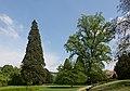 NDOÖ 029 Wilhering Mammutbaum Tulpenbaum Eibe Mai 2014.jpg