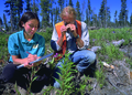 NRCSAK97013 - Alaska (157)(NRCS Photo Gallery).tif