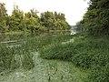 Na brehu Malého Dunaja - panoramio.jpg