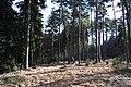 Natural monument Rysovy (6).JPG