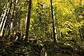 Nature reserve Ptaci stena in autumn 2011 (3).JPG
