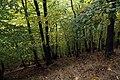 Nature reserve Zvolská homole in autumn 2014 (10).JPG