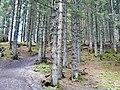 Naturerlebnispfad Söllereck - panoramio.jpg