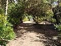 Natureza Parque do Peri By Mauro Soares - panoramio (2).jpg