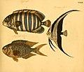 Naturgeschichte in Bildern mit erläuterndem Text (Taf. XXXIX) (6058662503).jpg