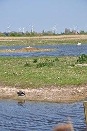 Naturschutzgebiet Fehmarn.jpg