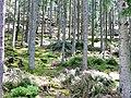 Naturschutzgebiet Hesel-, Brand- und Kohlmisse - panoramio (2).jpg
