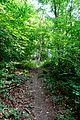 Naturschutzgebiet Saupark - Kleiner Deister - Waldweg (3).jpg