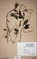 Neuchatel Herbarium Types NEU000113007.tif
