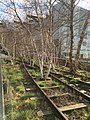 New York Highline Birch Trees.jpg