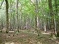 Newbridge Wood - geograph.org.uk - 177698.jpg
