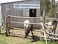 Newfoundland Ponies.jpg