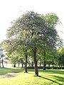 Newsham Park 028.jpg