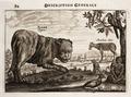 Nieuhof-Description-générale-de-la-Chine-1665 0873.tif