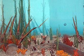 Ordovician - A diorama depicting Ordovician flora and fauna.