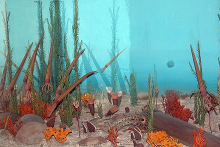 A diorama depicting Ordovician flora and fauna. Nmnh fg09.jpg