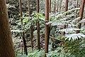 Northern limit of Hego habitat in Hachijojima Island F.jpg