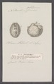 Notarchus cuvieri - - Print - Iconographia Zoologica - Special Collections University of Amsterdam - UBAINV0274 091 09 0002.tif