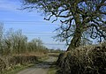 Oak tree and power lines - geograph.org.uk - 1801839.jpg