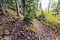 Oberg Mountain Loop Switchback - Autumn in Minnesota (37433510761).jpg