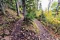 Oberg Mountain Loop Switchback - Autumn in Minnesota (37433510761).jpg