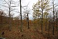 Omberg Oak trees.jpg