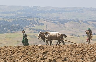 Ethiopian horses - Ploughing with horses in northern Ethiopia