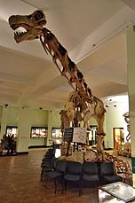 Opisthocoelicaudia Museum of Evolution in Warsaw 03.JPG