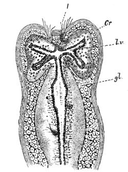 Image Result For Fig Leaves Animal