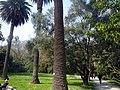 Orto Botanico di Roma - panoramio (7).jpg