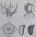 Ottův slovník naučný - obrázek č. 3072.JPG
