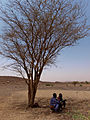 Oxfam East Africa - Herdsmen Wait for the Rain.jpg
