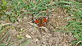 P1020495 Butterfly.jpg