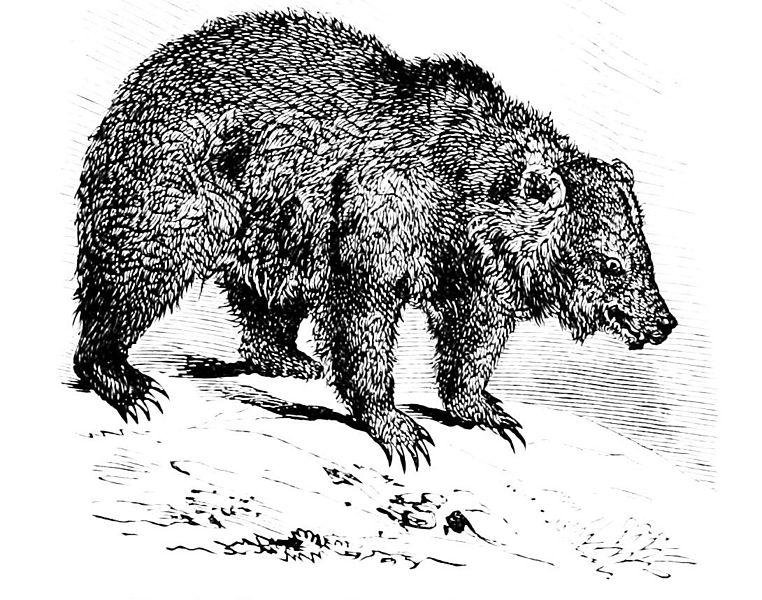 File:PSM V06 D297 Grizzly bear.jpg