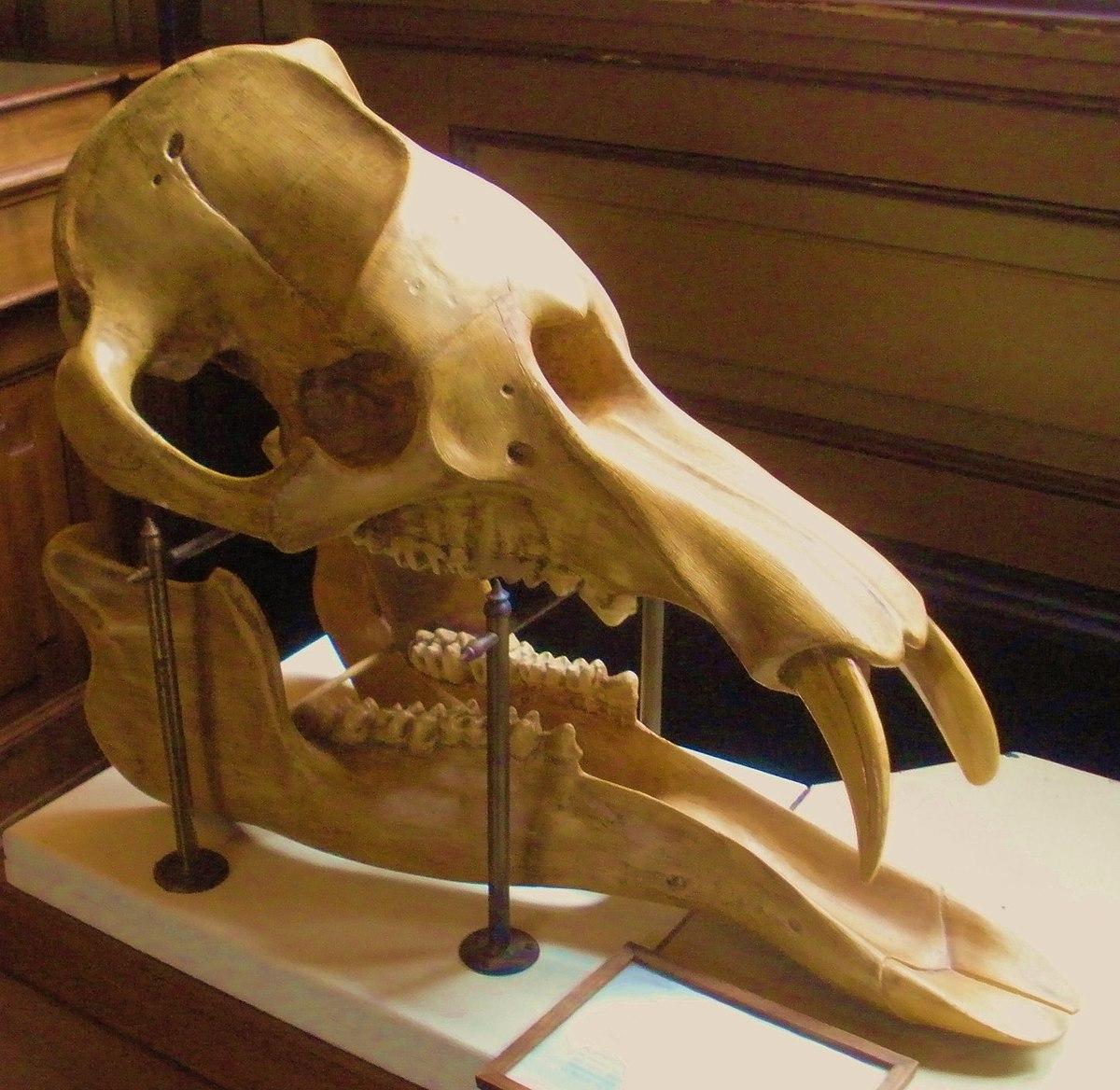 Skeleton Found In Lichfield Road Property Stafford