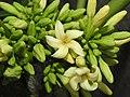 Papaya Carica papaya female flowers by Dr. Raju Kasambe DSCN9640 (3).jpg