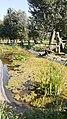 Parco del Medio Olonia presso Calipolis.jpg
