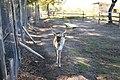 """Parcul de Animale - """"Moara de Vant"""" (8110020784).jpg"""