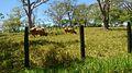 Parque Temático Hacienda Nápoles 48.jpg