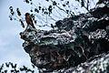 Passáro - Igatu - Chapada Diamantina.jpg