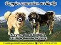 Pastores del caucaso.jpg