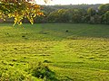 Pasture, Radnage - geograph.org.uk - 1024340.jpg