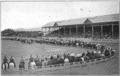 Pendleton Roundup 1913.png