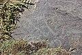 Petroglyphs from Ukhtasar 15092019 (360).jpg